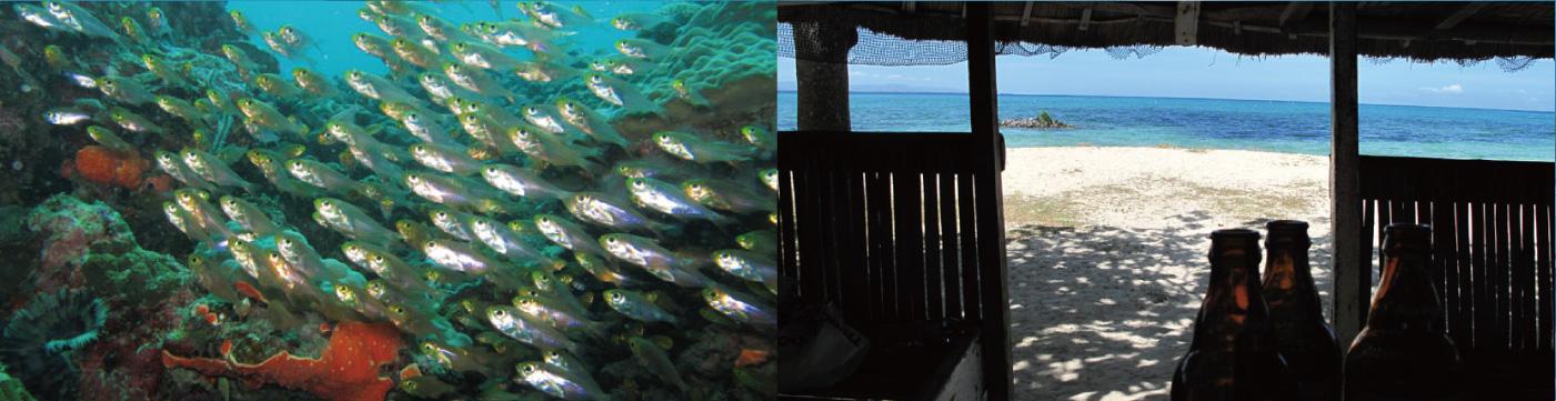 体験ダイビング+アイランドホッピングパンダノン島